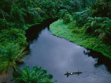 جنگلهاي باراني