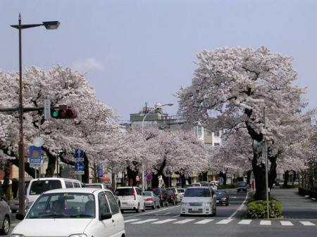 خیابان شکوفه